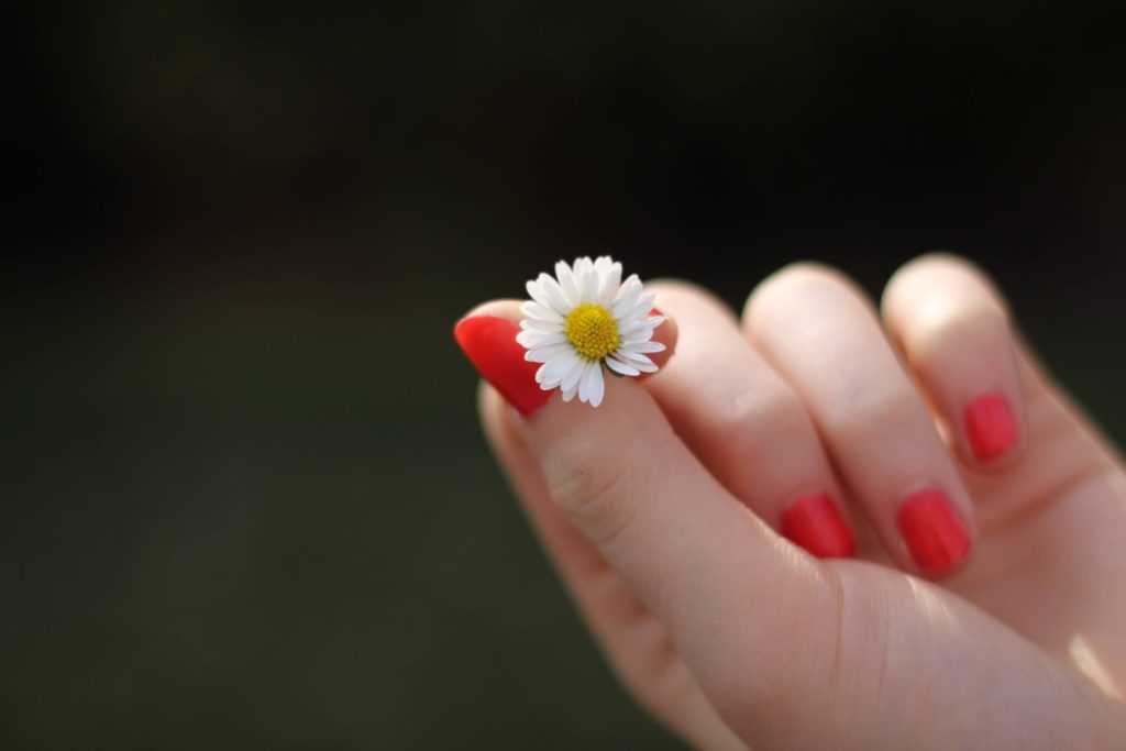 Hand with red painted nails holding a daisy